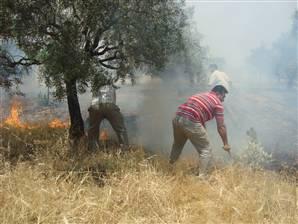 Izmir ve Didim'de Ormanlar Yaniyor